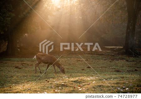 가을의 나라 공원의 사슴을 촬영 한 것 74728977