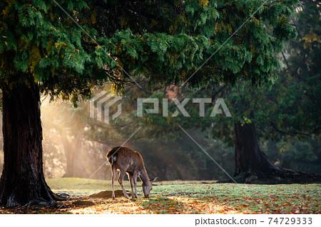 가을의 나라 공원의 사슴을 촬영 한 것 74729333