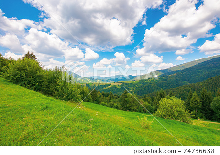 summer landscape in carpathian mountains. beautiful nature scenery with trees on the grassy meadow. fluffy clouds on the bright blue sky. wonderful travel destination of ukraine 74736638
