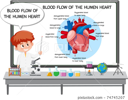Young Doctor explaining blood flow of the human heart 74745207