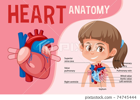 Information poster of human heart diagram 74745444