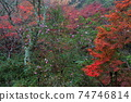 染成各種顏色的秋葉(愛知縣瀨戶市岩屋町岩屋堂公園) 74746814