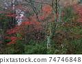 染成各種顏色的秋葉(愛知縣瀨戶市岩屋町岩屋堂公園) 74746848