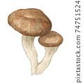 杏鮑菇蘑菇水彩鉛筆劃 74751524