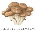 느타리 버섯 수채화 컬러 연필 그림 74751525