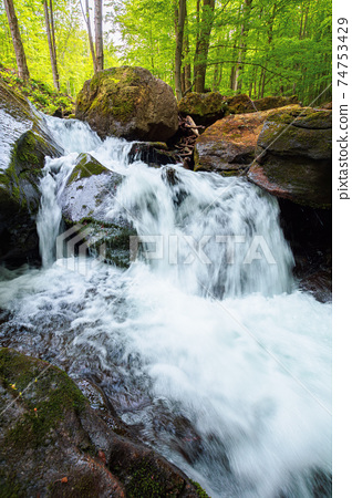 small waterfall in the forest. clean water of a mountain river flows among rock. spring nature background. lush green foliage on the trees on a sunny day 74753429