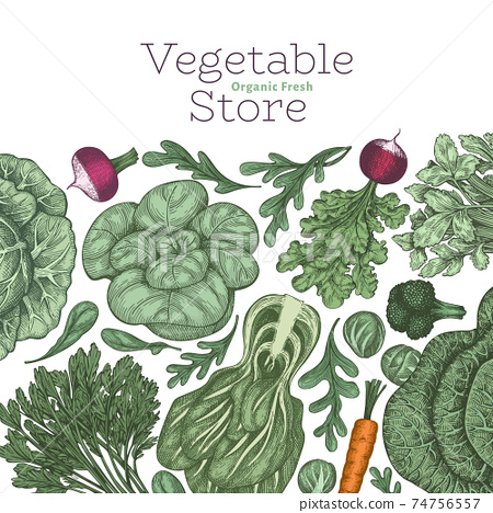Hand drawn vintage color vegetables design. Organic fresh food vector banner template. Retro vegetable background. Traditional botanical illustrations. 74756557
