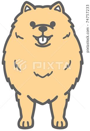 前面的博美犬狗的插圖 74757233
