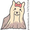 面對前面的約克夏犬的插圖 74757254