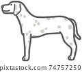 側身的斑點狗圖 74757259