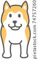 面對前面的柴犬的插圖 74757260
