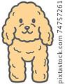 面對前面的玩具貴賓犬的插圖 74757261