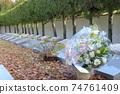 基督教墓白花 74761409