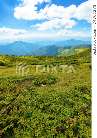 hills of the mountain rolling in to the distance. summer landscape of the black ridge in the eastern carpathians, ukraine. sunny scenery with fluffy clouds on the blue sky 74765278