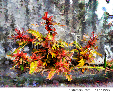 A shrub sheds its leaves in typical shades of autumn or fall 74774995