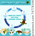 Diagram showing life cycle of Turtle 74778306