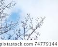 冬天的小樹林 74779144