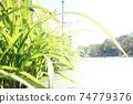 城市與植物 74779376
