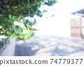 城市與植物 74779377