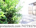 城市與植物 74779379