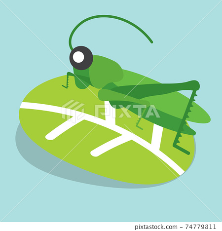 Grasshoppers Perched on The Leaves Vector Illustration. 74779811