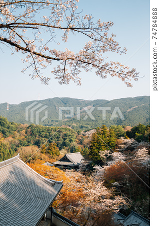 View of Hasedera temple at spring in Nara, japan 74784888