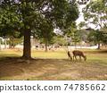 奈良與鹿的風景 74785662
