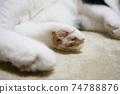 躺著的貓爪子 74788876