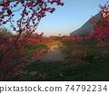 벚꽃 숲 74792234