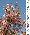 복숭아 나무 74792235