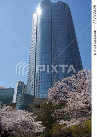 Roppongi building and cherry blossoms 74792260