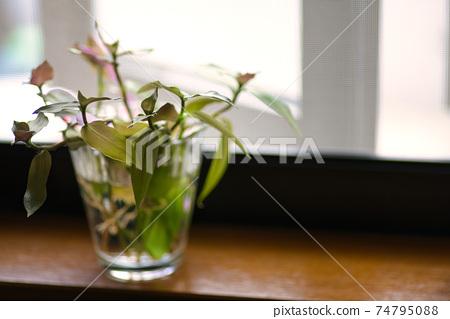 유리 컵에 들어간 창가에 관엽 식물의 꽃꽂이 74795088