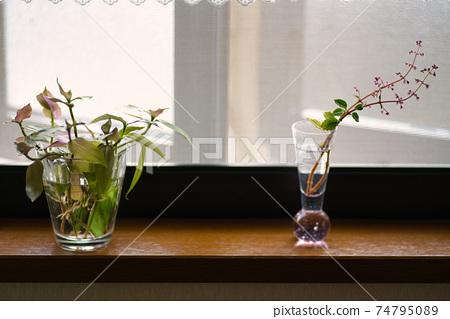 창가에 관엽 식물의 꽃꽂이와 꽃병 2 74795089