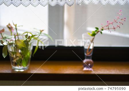 창가에 관엽 식물의 꽃꽂이와 꽃병 1 74795090