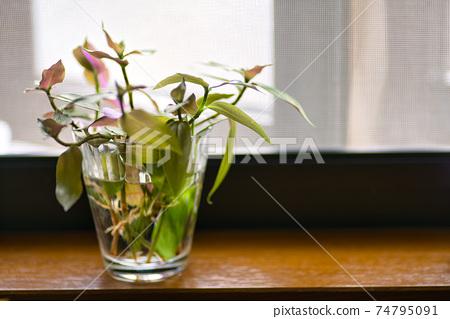 창가에 관엽 식물의 꽃꽂이 74795091