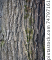 The bark of pine tree, background. 74797161