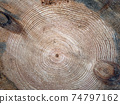 Wooden circle with a split cut of the log 74797162