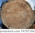 Wooden circle with a split cut of the log 74797164