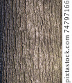 The bark of pine tree, background. 74797166
