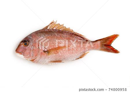 紅鯛魚 74800958
