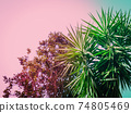 Abstract botanical background with palm tree against the skies 74805469
