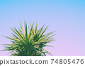 Abstract botanical background with palm tree against the skies 74805476