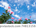 구름이 떠있는 푸른 하늘 아래 분홍색 장미 꽃 74813156