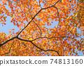 주황색 오오모미지의 단풍 74813160