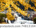 자소의 폭포를 배경으로 은행 나무의 단풍 74813164