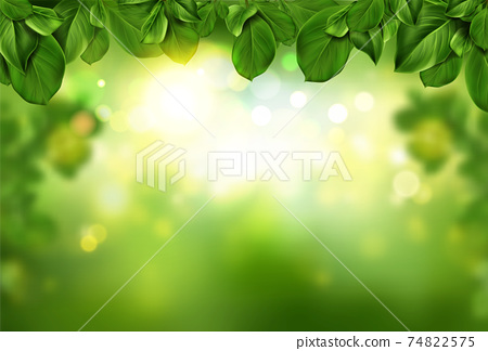 Tree leaves border on green fresh bokeh background 74822575
