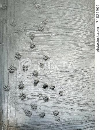 Dog paw footprint on fresh cement 74823906