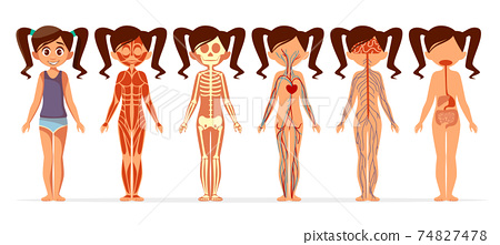 Girl body anatomy vector cartoon illustration of female muscular, skeletal, circulatory or nervous and digestive system 74827478