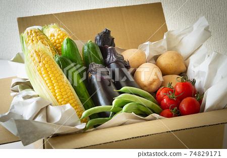 各種夏季蔬菜簽約農戶上門交付的蔬菜收穫夏季蔬菜 74829171