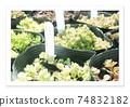 電影攝影多肉植物 74832182